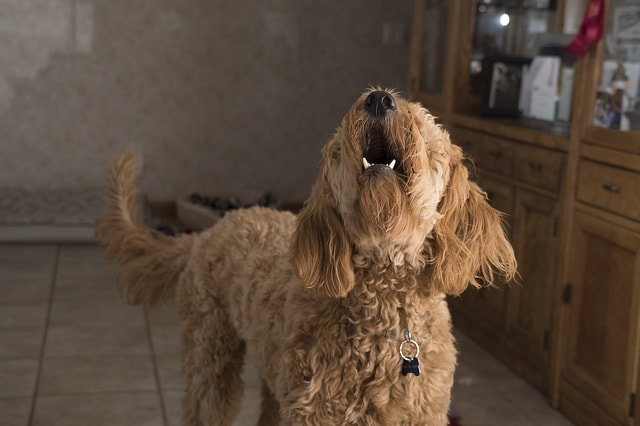 How To Stop Your Dog From Barking When Left Alone