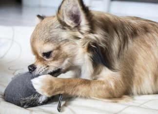 How to stop dog from chewing things