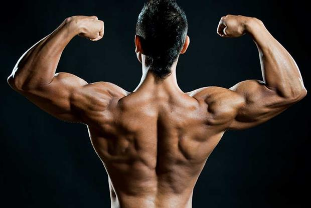 How does Anabolic Steroids works