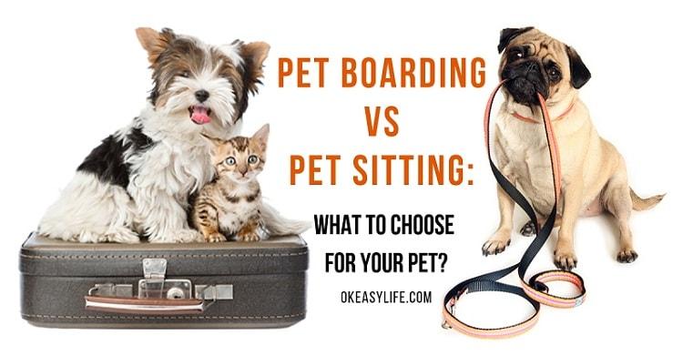Pet Boarding vs Pet Sitting