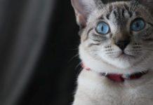 Cats training collar