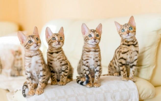 Prevent Jealousy When Raising Multiple Cats